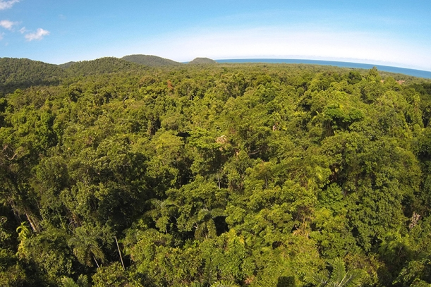 View across the daintree rainforest (photo: MN)