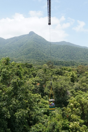 Sampling from the rainforest canopy, at the Daintree Rainforest Observatory (photo: MN)